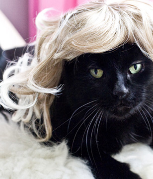 from the Kitty Wig website, Photo by Jill Johnson